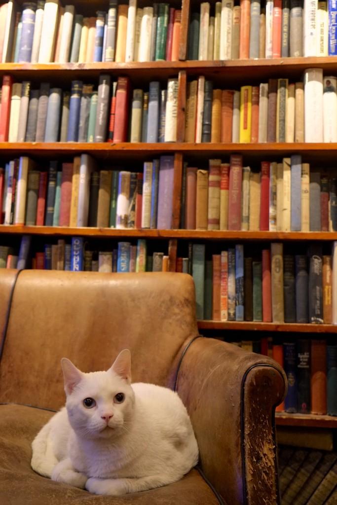 Shakespeare & Co Кошка Китти