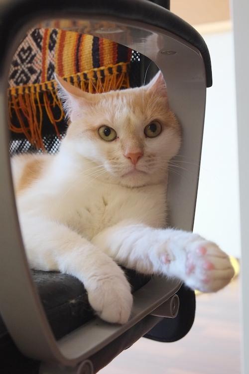 Кот слушает новости